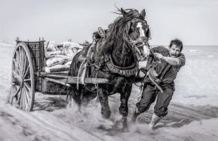 Visita las fotos ganadoras del XXXVI Salón de Otoño de Fotografía de Sagunto